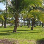 Attico Miami Beach (10)